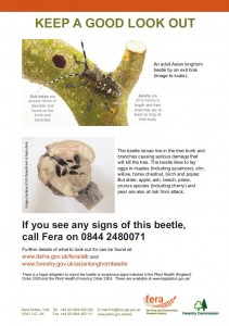 Asian longhorn leaflet