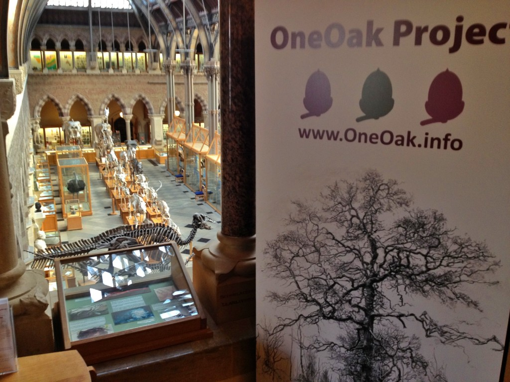 OneOak exhibition at Oxford University Museum of Natural History