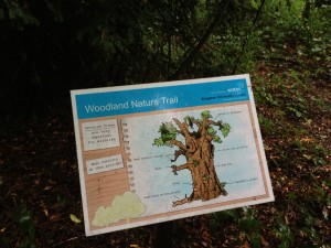 Woodland Nature Trail at Kingston University