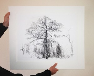 OneOak tree portrait - mounted