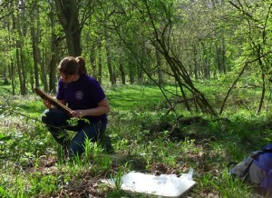 Sylva Scholar Kirsty Monk studying a log sample