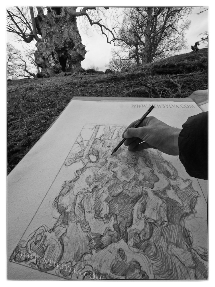 Sarah Simblet working on the composition of the venerable ash tree for The New Sylva