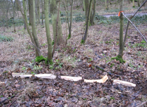 The first of 32 sample plots studying the effect of tree type and wood type on decomposer communities