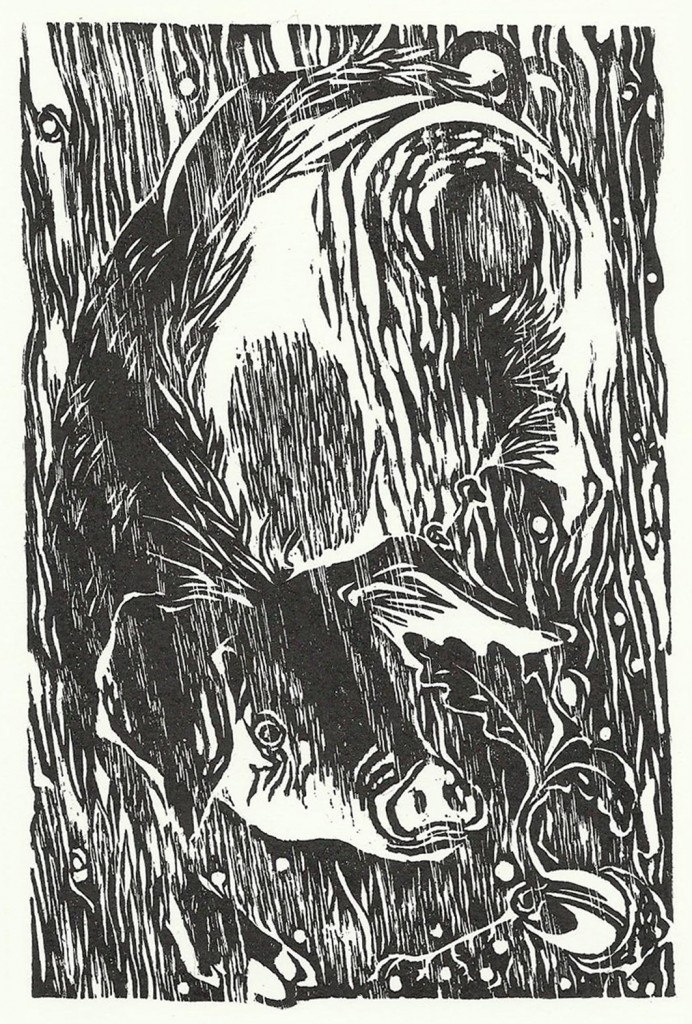 The sow and the acorn by Rosie Fairfax-Cholmeley of Flagstone Press