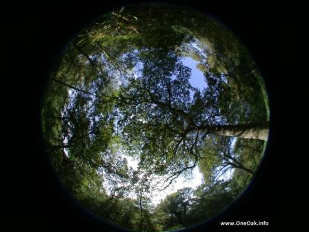 Hemispherical image of the OneOak tree canopy
