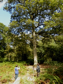 Forest Research scientists measure the OneOak tree