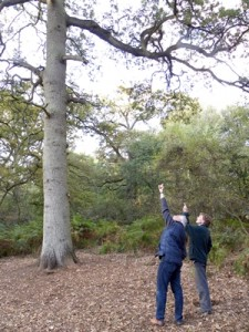 Phil Koomen and James Binning debating the quality of the OneOak tree